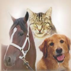 Állatpszichológia