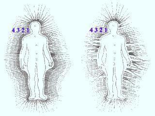 Bach virágterápia: Az energiarendszer torzulása betegség esetén