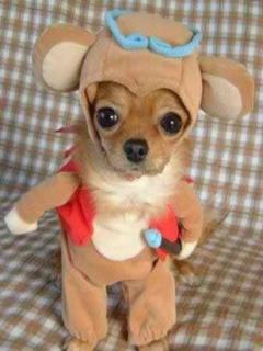 Kutya mánia - ez tiszta kabaré