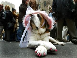 Kutya mánia - Elég dögös vagyok?