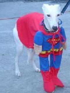 Kutya mánia - hát az én gazdim sem egy Super Man!