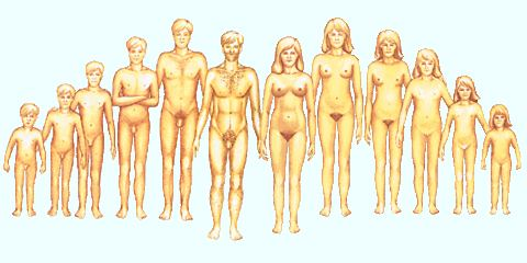 Serd�l�kor (pubert�skor) testi v�ltoz�sai