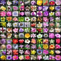 A virágszedés lélektana: Hamvas Béla: A babérligetkönyv (részlet)
