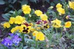 A virágszedés lélektana - A növény két világban él és kettőt köt össze: a föld alattit, azt, ahol a halottak vannak, ahol az anyag van és a föld felettit, ahol a lelkek vannak, s ahol a szellem van.